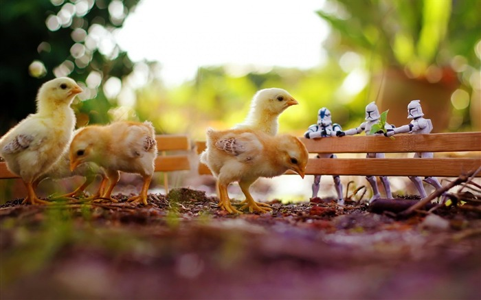 small chickens-Animal Photo Wallpaper Views:2875