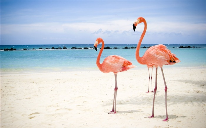 Birds on Beach-High Quality HD Wallpaper Views:3919 Date:12/24/2014 7:16:07 AM