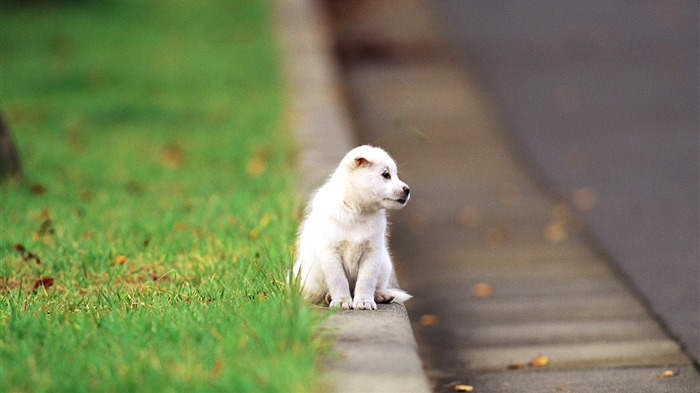 Cute Lonely Puppy-High Quality HD Wallpaper Views:2249