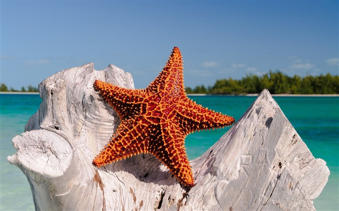 Red Starfish-High Quality HD Wallpaper Views:3447 Date:12/24/2014 7:27:42 AM