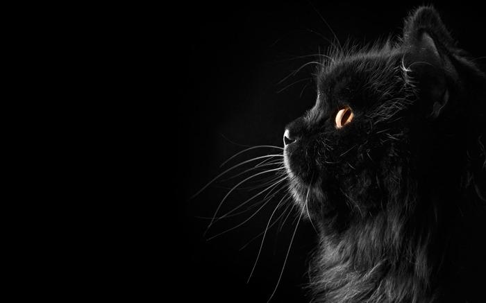 黑色的猫-动物宽屏壁纸