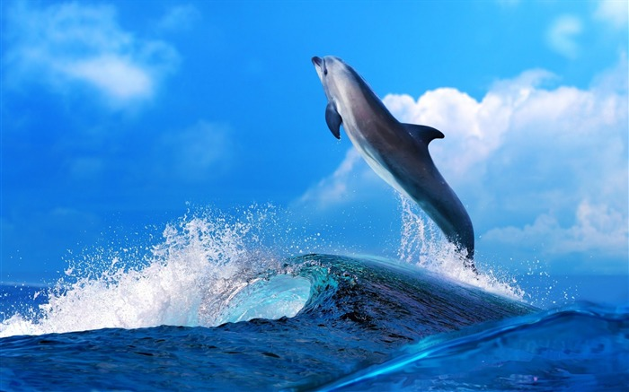 Dolphin Jumping In Waves-Animal Widescreen Wallpaper Views:3180