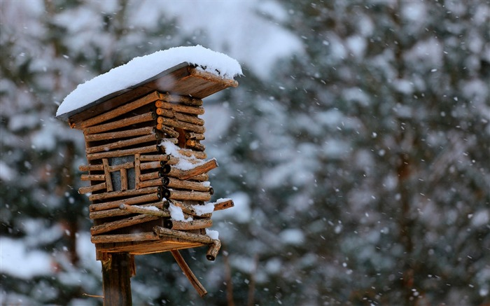 birdhouse snow winter-HD Widescreen Wallpaper Views:3249