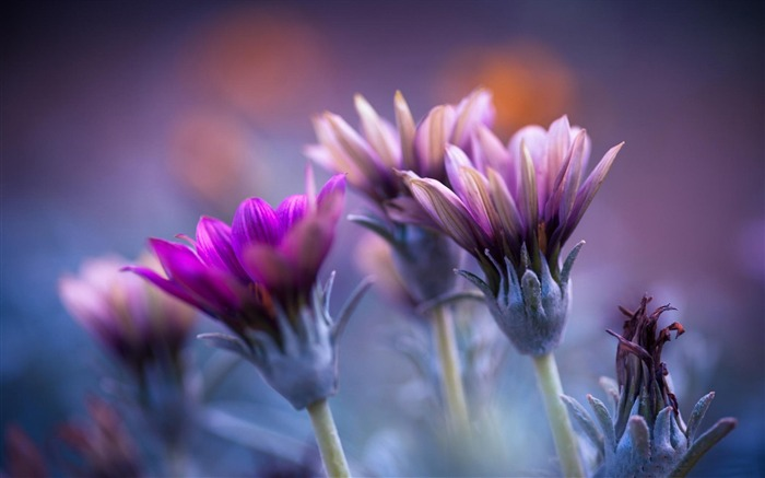 flowers blurred background-HD widescreen wallpaper Views:6208 Date:1/23/2015 11:23:34 PM