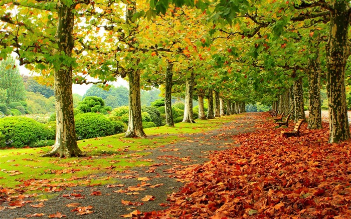 park autumn foliage-HD Widescreen Wallpaper Views:2616