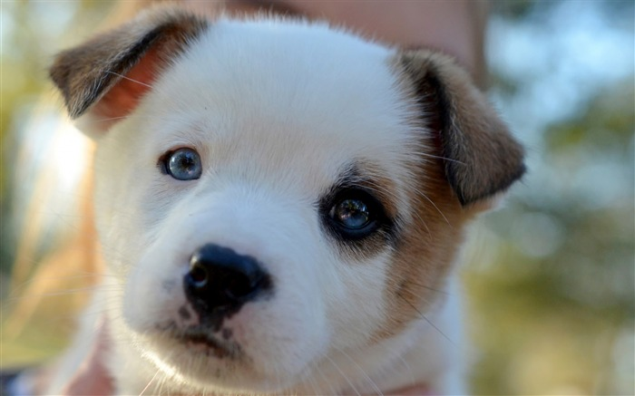 puppy cute face spotted-Animal Widescreen Wallpaper Views:3728