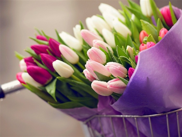 tulips bouquets-HD widescreen wallpaper Views:3473 Date:1/23/2015 11:31:43 PM