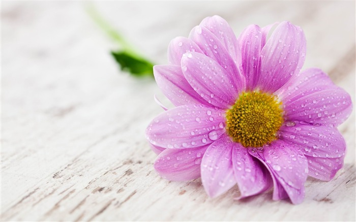 water drops on pink flower-HD widescreen wallpaper Views:3094 Date:1/23/2015 11:32:51 PM