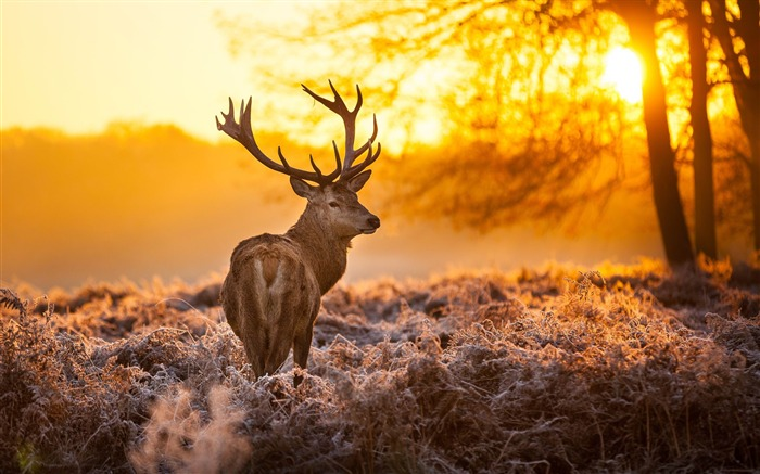 Elk Animal photography theme HD Wallpaper Views:9580