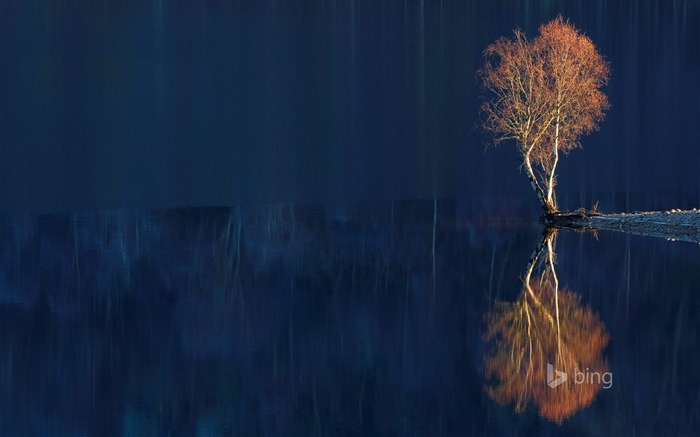 Reflection of dead trees-2015 Bing theme wallpaper Views:3916 Date:3/3/2015 7:08:00 AM
