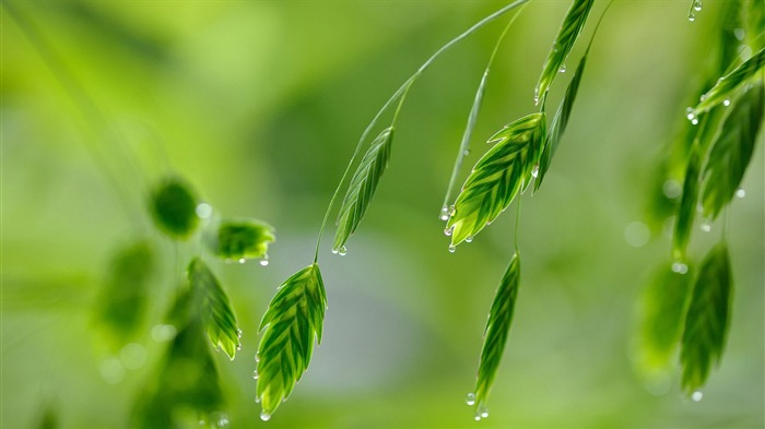 leaves with water drops-HD Widescreen Wallpaper Views:2312