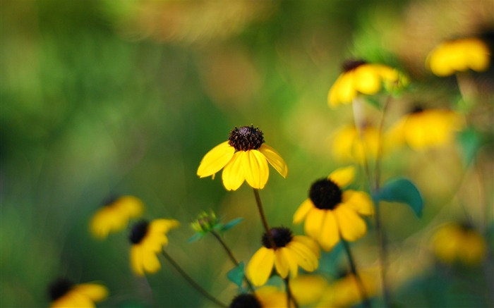 yellow small flowers-Photography HD wallpaper Views:2959 Date:4/8/2015 8:37:38 AM