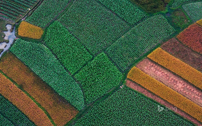 Aerial view of Farm-2015 Bing theme wallpaper Views:2739