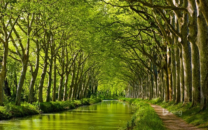 Forest green river-2015 Bing theme wallpaper Views:3810