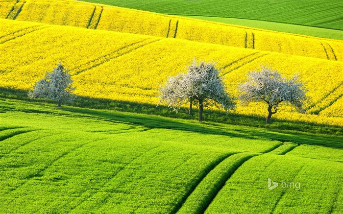 Green yellow field-2015 Bing theme wallpaper Views:3013