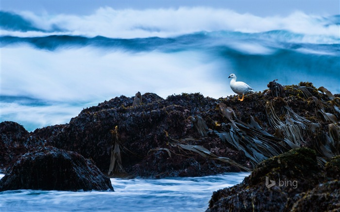 Gulls on the rocks-2015 Bing theme wallpaper Views:2204