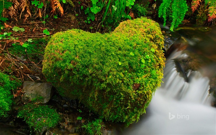 Heart shaped moss beside streams-2015 Bing theme wallpaper Views:2338