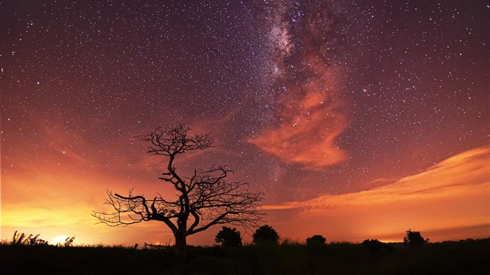 Withered under the stars-Windows 10 HD Wallpaper Views:16019 Date:5/24/2015 6:53:42 AM