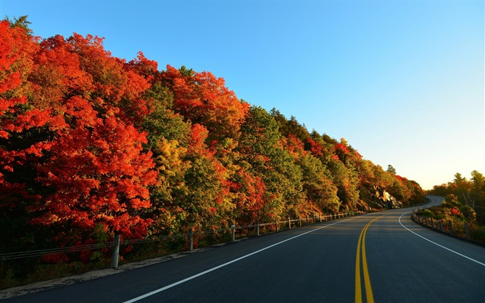autumn road trees marking-High Quality HD Wallpaper Views:2258