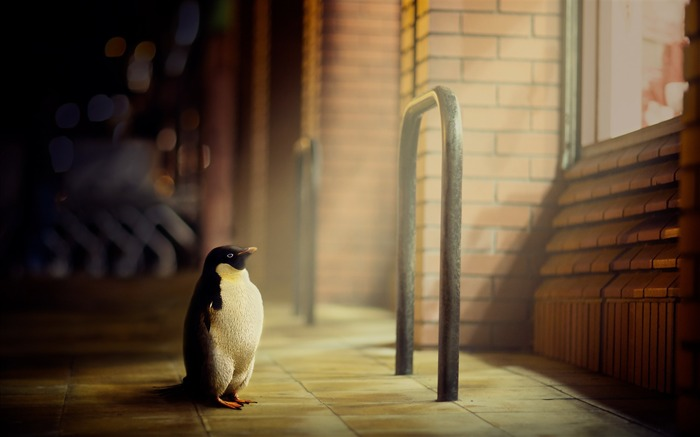 penguin light window-High Quality HD Wallpaper Views:2660