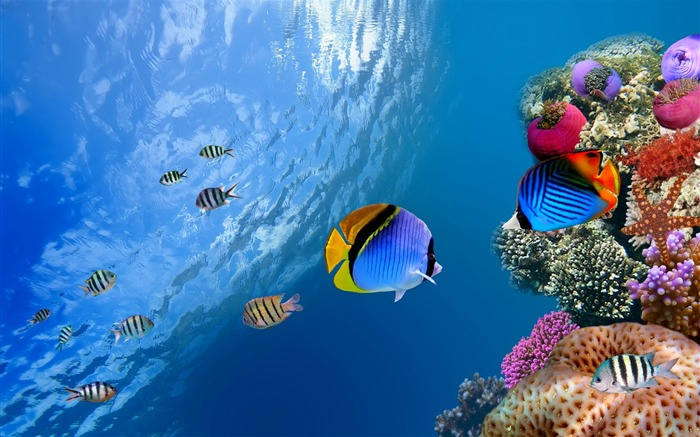 underwater coral scene-High Quality HD Wallpaper Views:1551