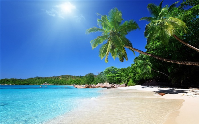 beach sand palm trees-Scenery HD Wallpapers Views:1089