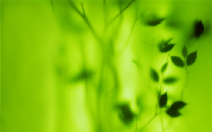 blurred green leaves-Plants HD wallpaper Views:2001