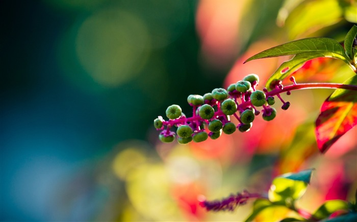 bokeh colorful-Plants HD wallpaper Views:2137