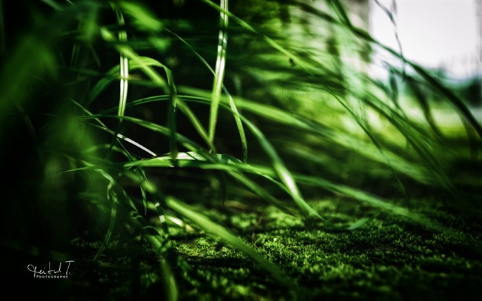 green grass-Plants HD wallpaper Views:2522