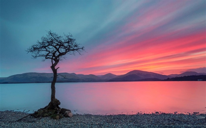 lonely tree-Nature HD Wallpaper Views:1830