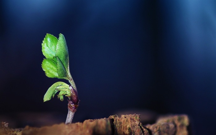 mini plant leaves-Plants HD wallpaper Views:1534