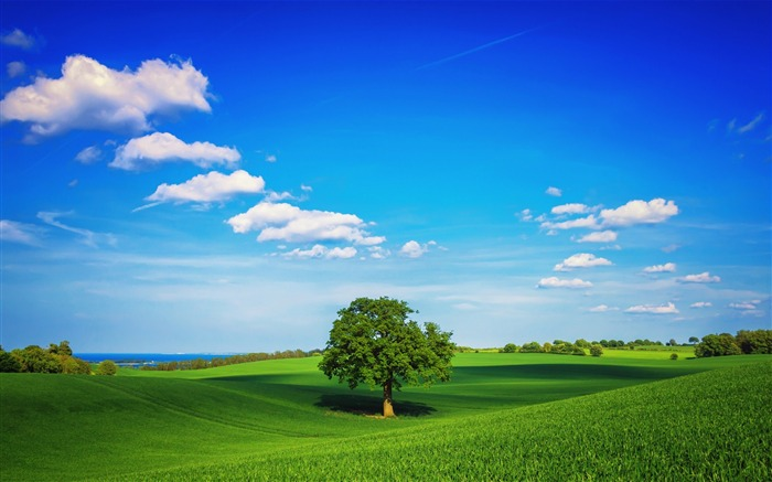 sky lonely tree summer-Scenery HD Wallpaper Views:2882