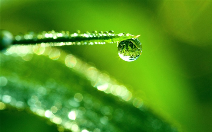 water drop reflection-Plants HD wallpaper Views:860