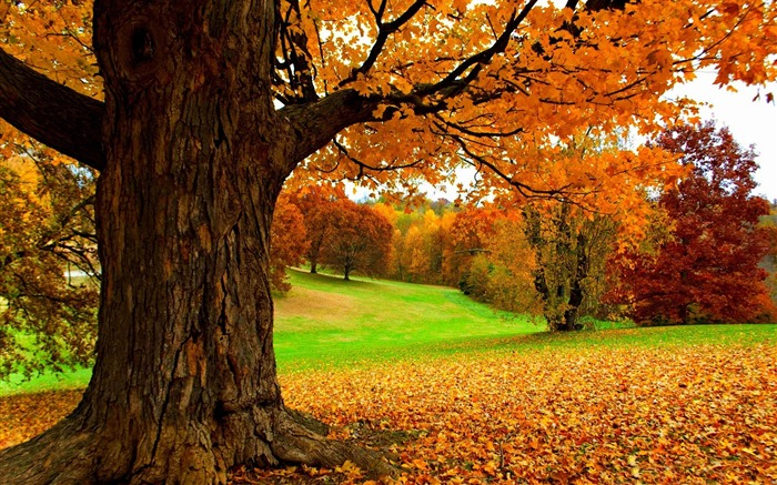 Autumn under a yellow tree-HD Nature Wallpaper Views:1115