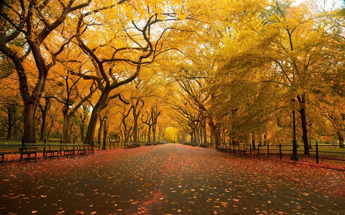 Autumn wide alley-HD Nature Wallpaper Views:1266