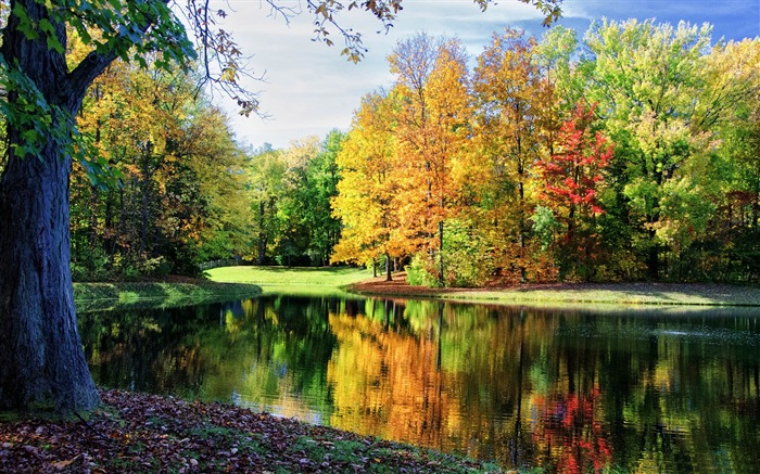 Colorful trees reflections-HD Nature Wallpaper Views:2213