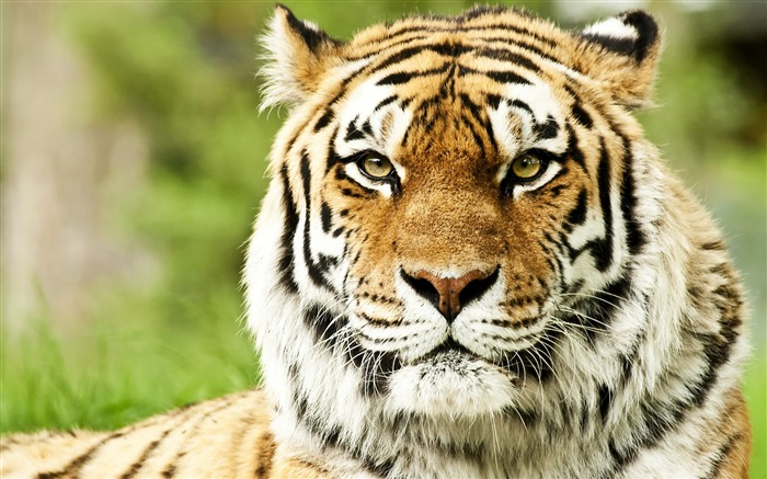 2015 Wild Animal World HD Wallpaper Views:7578
