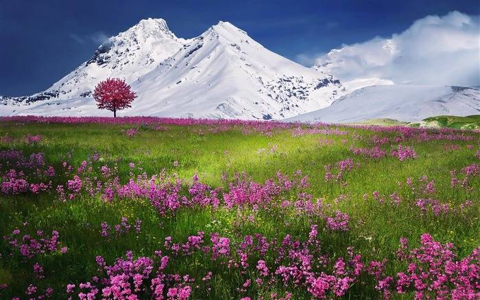 Amazing Nature Scenery-HD Wide Wallpaper Views:1370