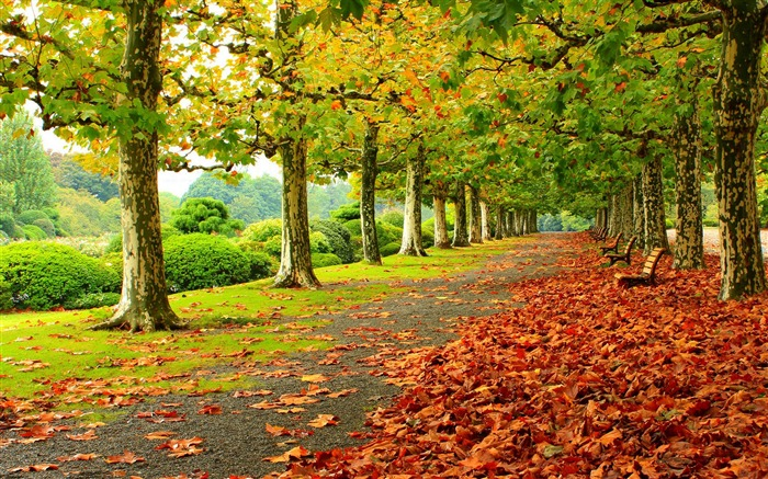 Autumn Nature Photography HD Wallpaper Views:19974