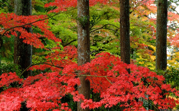 Autumn forest-November 2015 Bing Wallpaper Views:1589