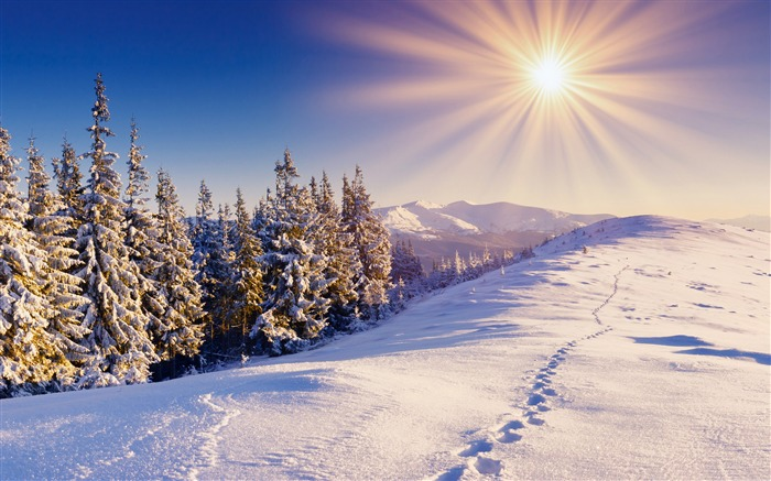 Footprints in the snow-2015 Landscape Wallpaper Views:2340