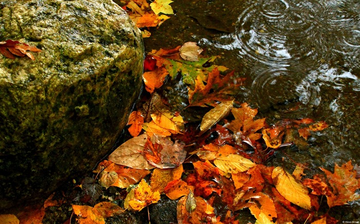 Leaves on the water-November 2015 Bing Wallpaper Views:1384