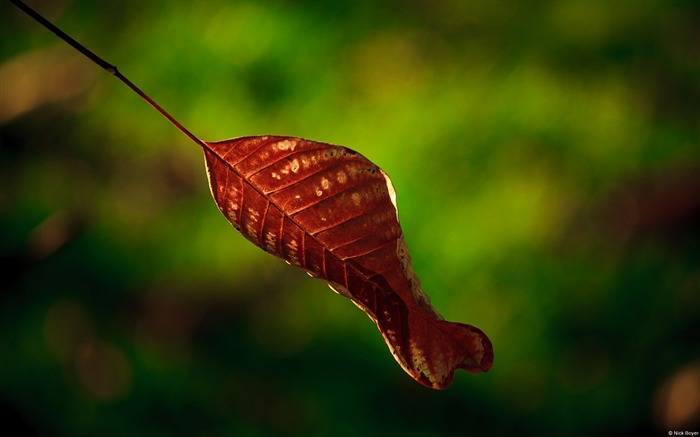 Red leaves bokeh-November 2015 Bing Wallpaper Views:1599