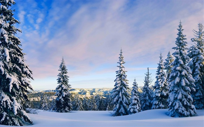 Snowy pine trees-Nature HD Wallpaper Views:3856 Date:11/4/2015 8:07:22 AM