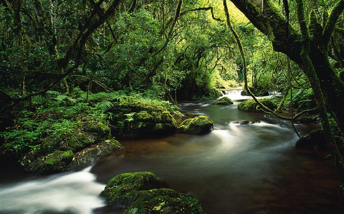 Trees river moss jungle-Travel HD Wallpaper Views:1288