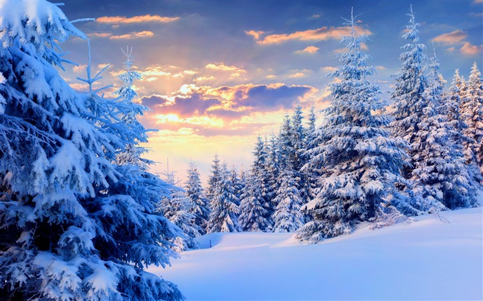 Trees under snow forest-2015 Landscape Wallpaper Views:2285