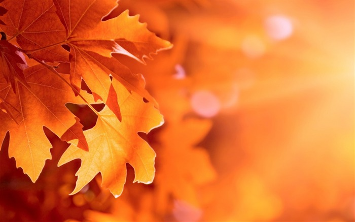 Autumn leaves bokeh-High Quality HD Wallpaper Views:1629
