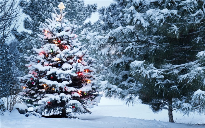 Beautiful christmas tree-2016 Merry Christmas Wallpaper Views:4810 Date:12/9/2015 7:23:40 AM