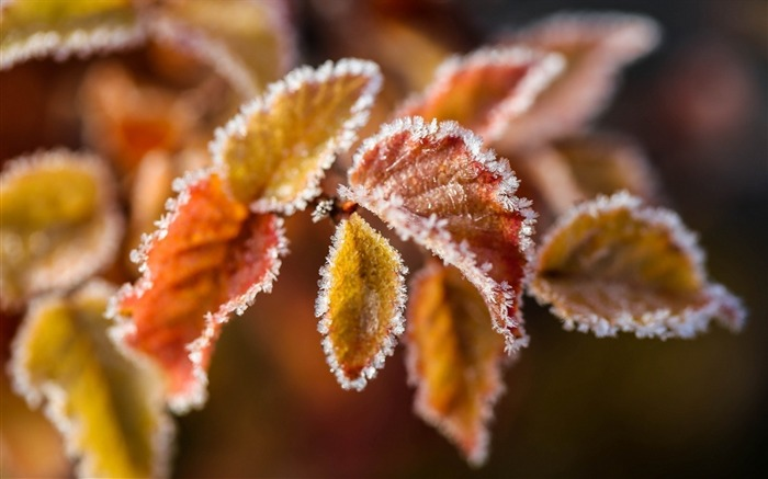 Branches leaves frost-High Quality HD Wallpaper Views:1440