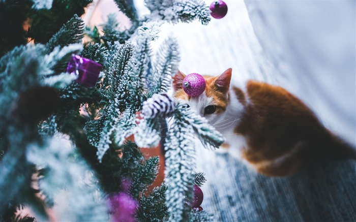 Cat christmas tree-2016 Merry Christmas Wallpaper Views:5219 Date:12/9/2015 7:25:11 AM